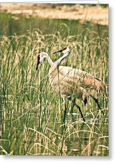 Recently Sold -  - Sea Animals Greeting Cards - Sandhill crane 1 Greeting Card by Lanjee Chee