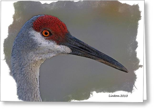 Sandhill Crane Portrait Greeting Card by Larry Linton