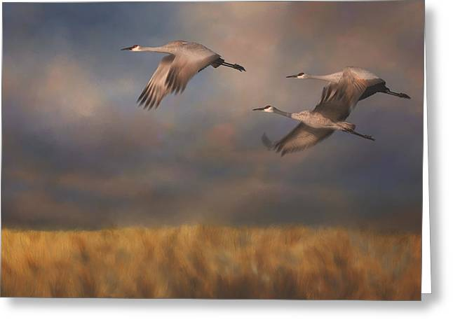 Sandhill Cranes Greeting Cards - Sandhill Crane Trio In Flight I Greeting Card by Sharon Norman