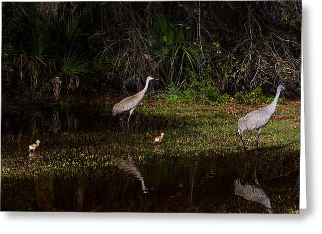 Crane Greeting Cards - Sandhill Cranes And Chicks Greeting Card by Zina Stromberg