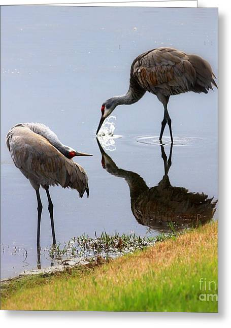 Reflection On Pond Greeting Cards - Sandhill Cranes Reflection on Pond Greeting Card by Carol Groenen