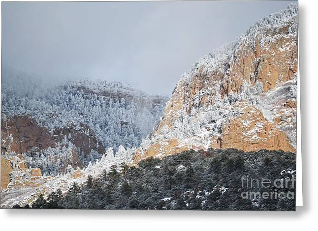 Snow Tree Prints Greeting Cards - Sandia Mountains Desert Winter Landscape Greeting Card by Andrea Hazel Ihlefeld