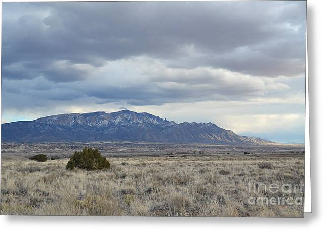 Winter Storm Greeting Cards - Sandia Mountains Field View Greeting Card by Andrea Hazel Ihlefeld