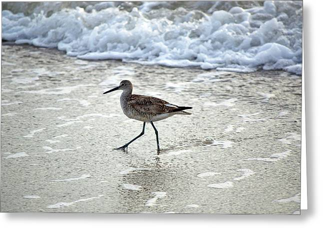 Sandpipers Greeting Cards - Sandpiper Escaping The Waves Greeting Card by Kenneth Albin