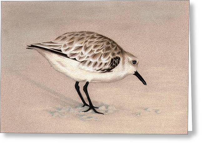 Sandpiper On Sand Greeting Card by Heather Mitchell