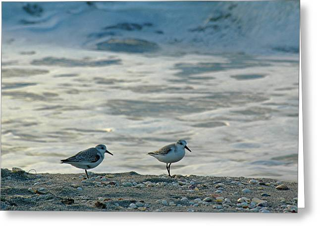 Sandpiper Greeting Cards - Sandpipers Greeting Card by Juergen Roth