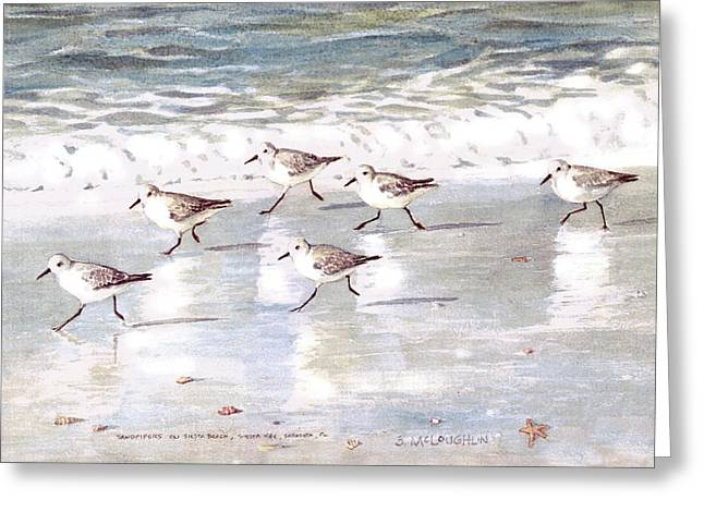 Sandpipers On Siesta Key Greeting Card by Shawn McLoughlin