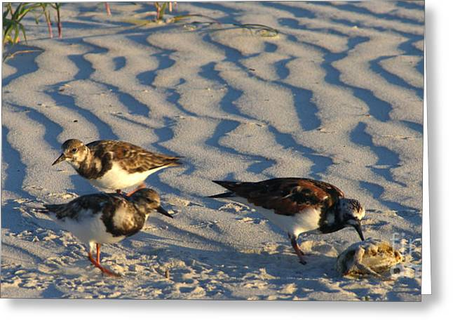 Seabirds Greeting Cards - Sandpipers with crab for breakfast  Greeting Card by Julianne Felton