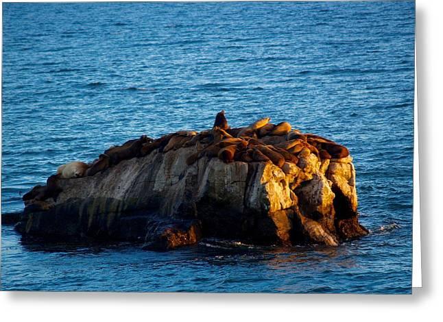 Steamer Lane Greeting Cards - Santa Cruz sea lions on days last rays Greeting Card by Brian Deuel