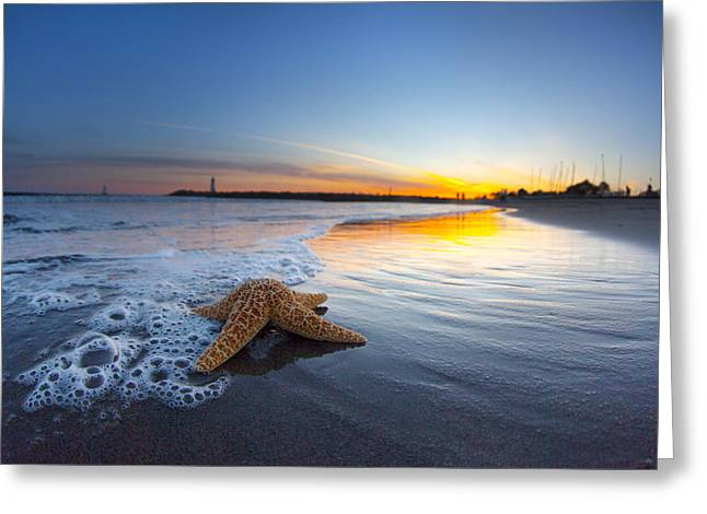 Santa Cruz Starfish Greeting Card by Sean Davey