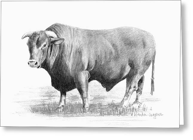 Steer Drawings Greeting Cards - Santa Gertrudis Bull Greeting Card by Arline Wagner