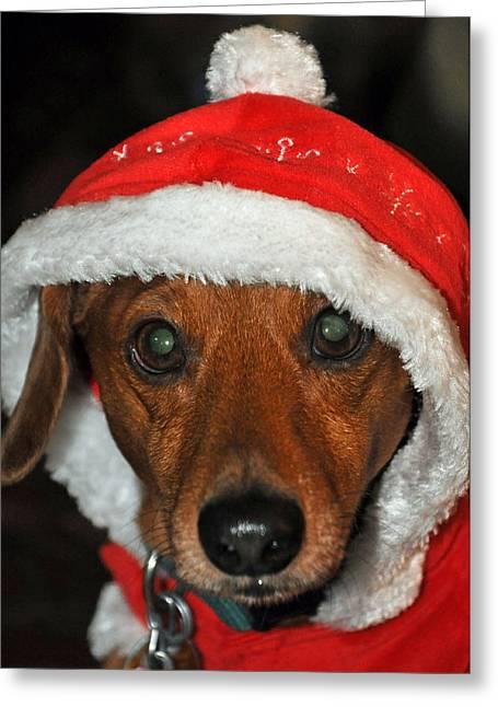 Santa Puppy Greeting Card by Teresa Blanton