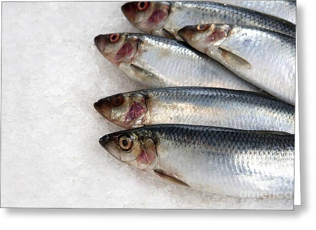 Fishmongers Greeting Cards - Sardines on ice Greeting Card by Jane Rix