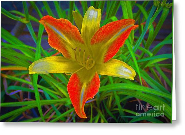 Saturated Day Lily Greeting Card by Skip Willits
