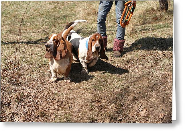 Basset Hound Framed Prints Greeting Cards - Saturday 204 Greeting Card by Wendy Fike