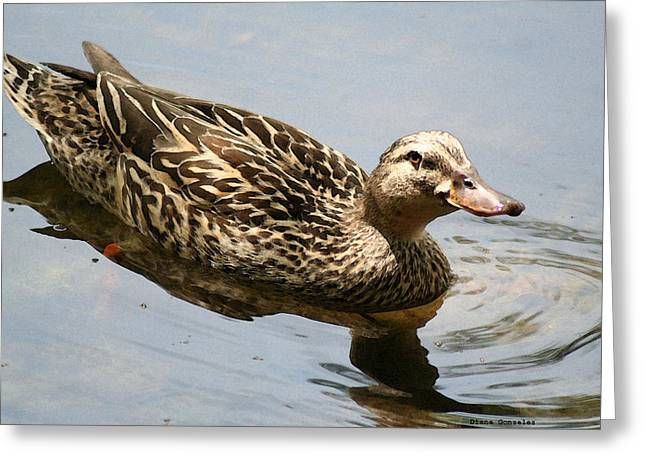Mallard Drawings Greeting Cards - Saturday at the Pond Greeting Card by Diana Gonzalez