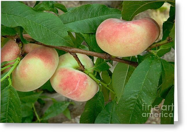 Prunus Persica Greeting Cards - Saturn Donut Peaches Greeting Card by Inga Spence