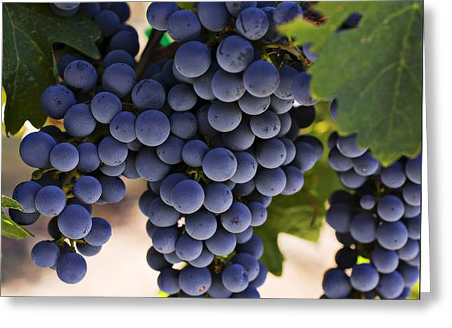Sauvignon grapes Greeting Card by Garry Gay