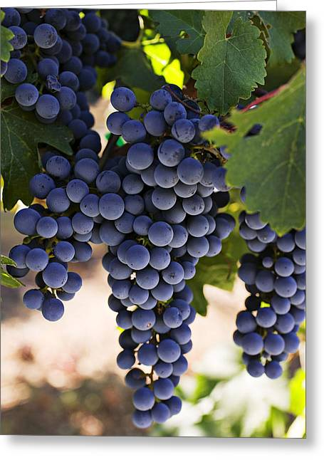 Vineyard Photographs Greeting Cards - Sauvignon grapes Greeting Card by Garry Gay