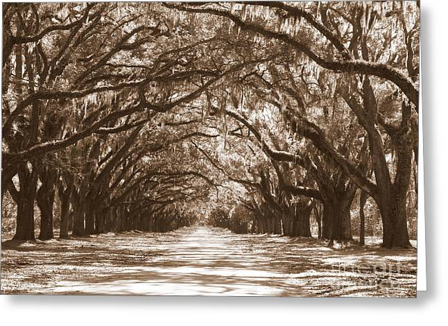 Savannah Sepia - Glorious Oaks Greeting Card by Carol Groenen