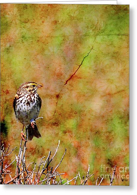 Sparrow Greeting Cards - Savannah Sparrow . Texture . 40D5883 Greeting Card by Wingsdomain Art and Photography