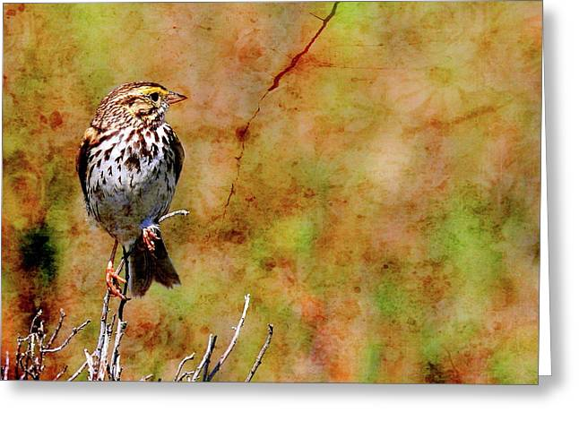 Sparrow Greeting Cards - Savannah Sparrow . Texture . Square . 40D5883 Greeting Card by Wingsdomain Art and Photography