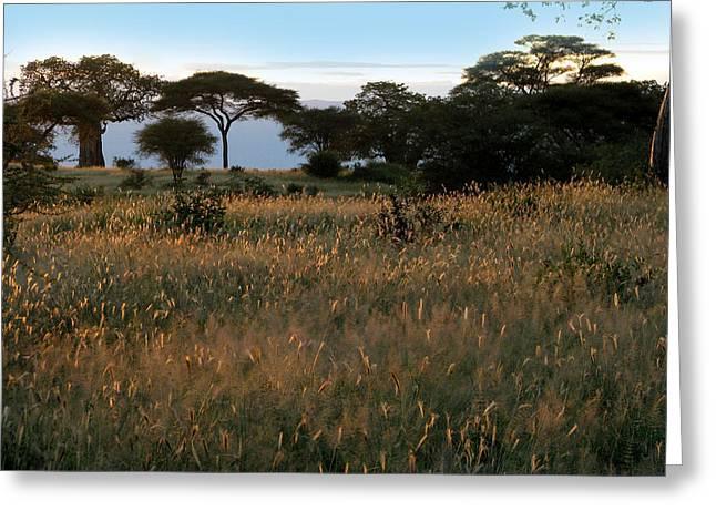 Tree. Acacia Greeting Cards - Savannah Sunrise Greeting Card by Joseph G Holland