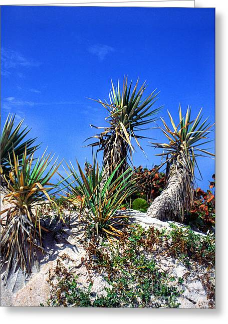 Saw Greeting Cards - Saw Palmetto Canaveral National Seashore Greeting Card by Thomas R Fletcher