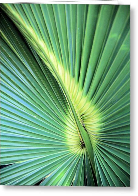 Saw Greeting Cards - Saw Palmetto Natural Greeting Card by Rosalie Scanlon