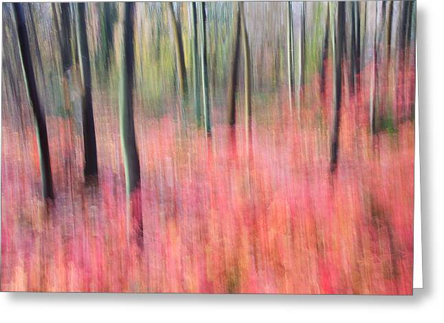 Ly Greeting Cards - Sayen Gardens Autumn New Jersey Greeting Card by Binh Ly