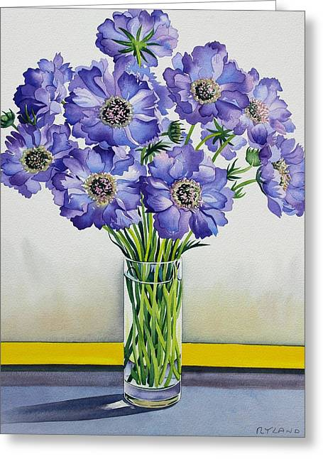 Glass Vase Drawings Greeting Cards - Scabious with Yellow Band Greeting Card by Christopher Ryland