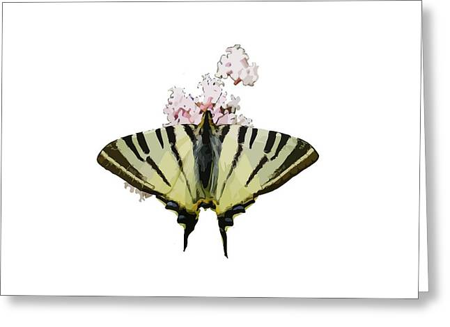 Butterfly Blue Pincushion Flower Greeting Cards - Scarce Swallowtail On Wild Garlic Flowers Vector Isolated Greeting Card by Tracey Harrington-Simpson