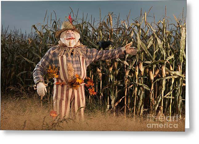 Evening Dress Greeting Cards - Scarecrow in a Corn Field Greeting Card by Oleksiy Maksymenko