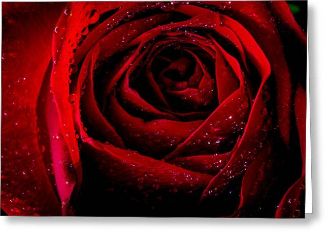 Canon 6d Digital Art Greeting Cards - Scarlet Greeting Card by Keith Hawley