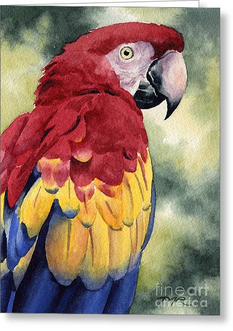 Macaw Art Giclee Greeting Cards - Scarlet Macaw Greeting Card by David Rogers