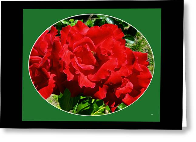 Scarlet Radiance Greeting Card by Will Borden
