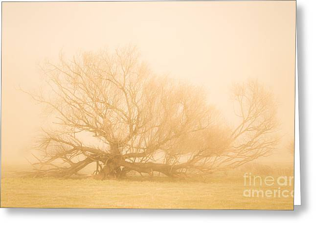 Scary Tree Scenes Greeting Card by Jorgo Photography - Wall Art Gallery