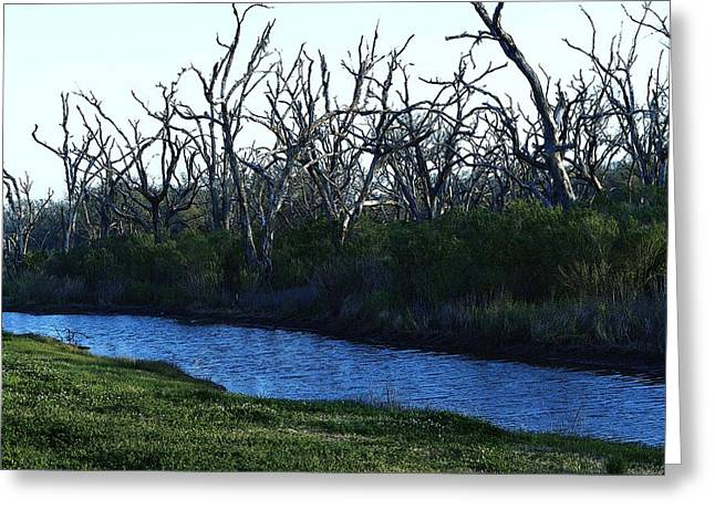 Eye4life Photography Greeting Cards - Scary Trees Greeting Card by Alicia Morales
