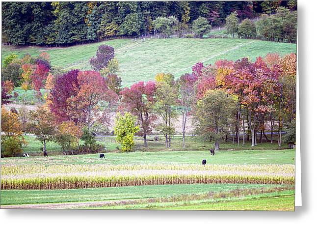Amish Farms Greeting Cards - Scenic Amish Landscape 2 Greeting Card by Sharon Norman