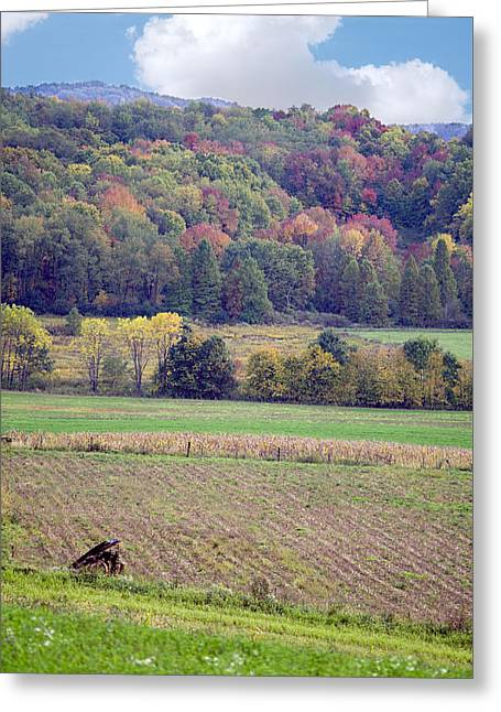 Amish Farms Greeting Cards - Scenic Autumn Landscape 3 Greeting Card by Sharon Norman