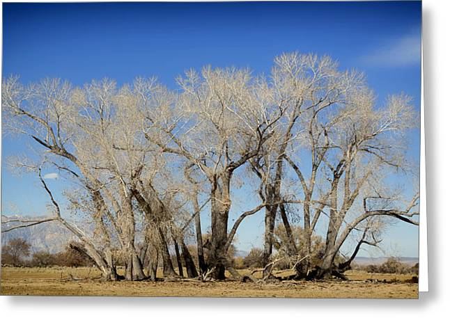 Scrub Brush Greeting Cards - Scenic California Greeting Card by Mountain Dreams