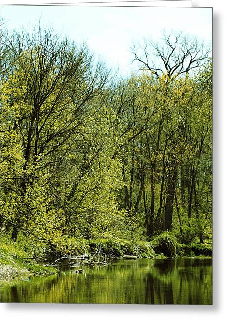 Scenic Reserve Greeting Card by Tom Druin