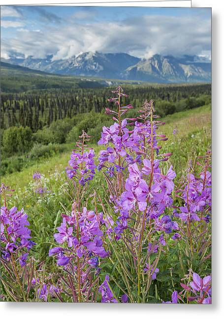 Scenic View Of Landscape Near Palmer Greeting Card by Remsberg Inc