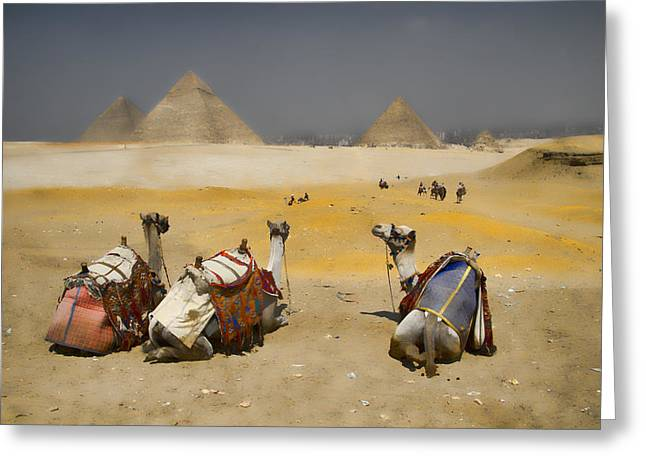 Egyptian Photographs Greeting Cards - Scenic view of the Giza Pyramids with sitting camels Greeting Card by David Smith