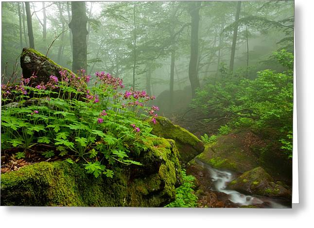 Geranium Greeting Cards - Scent of Spring Greeting Card by Evgeni Dinev