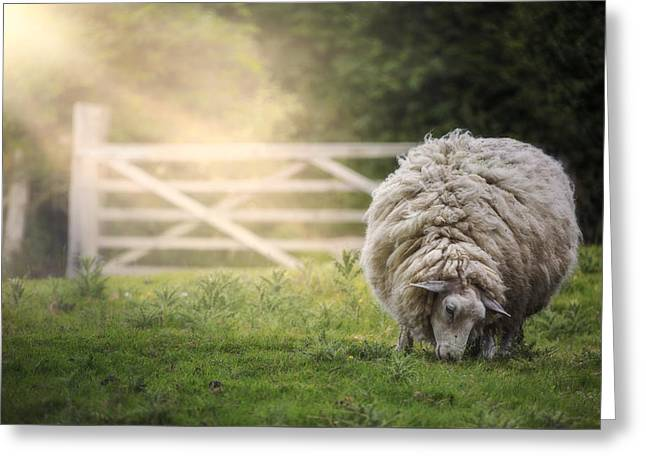 Sonne Greeting Cards - Sheep Greeting Card by Joana Kruse