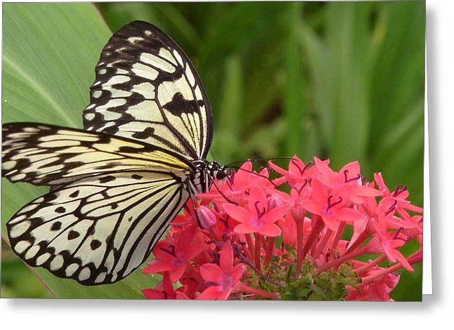 Photografie Greeting Cards - Schmetterling Greeting Card by Renata Vogl