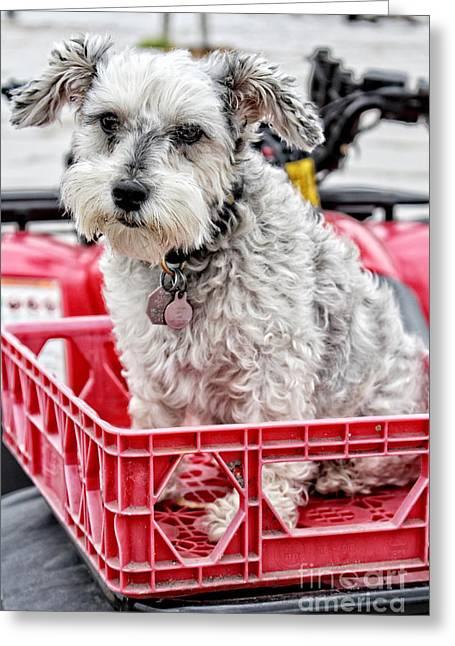 Puppy Digital Art Greeting Cards - Schnauzer Puppy Mania - I Got a Ticket To Ride Greeting Card by Ella Kaye Dickey