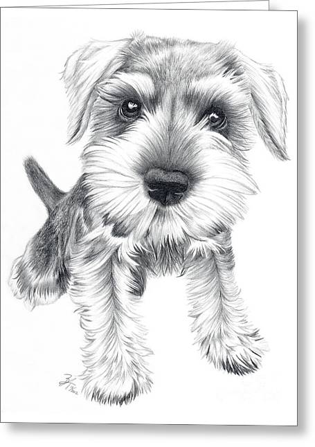 Puppies Drawings Greeting Cards - Schnozz Greeting Card by Beth Thompson