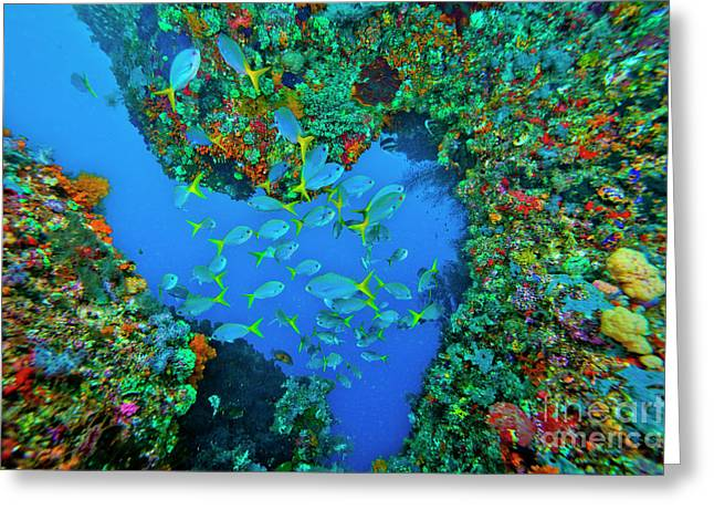 Undersea Photography Greeting Cards - School Of Yellowtail Fusilier, Raja Greeting Card by Beverly Factor